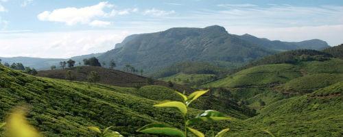 Viaggio Privato in Kerala